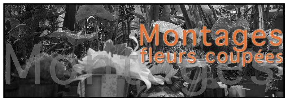 Banniere-Galerie-Montages-V2