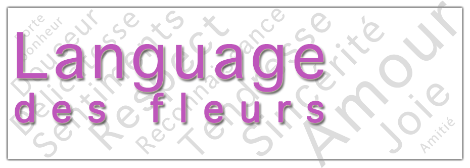 Banniere-Language