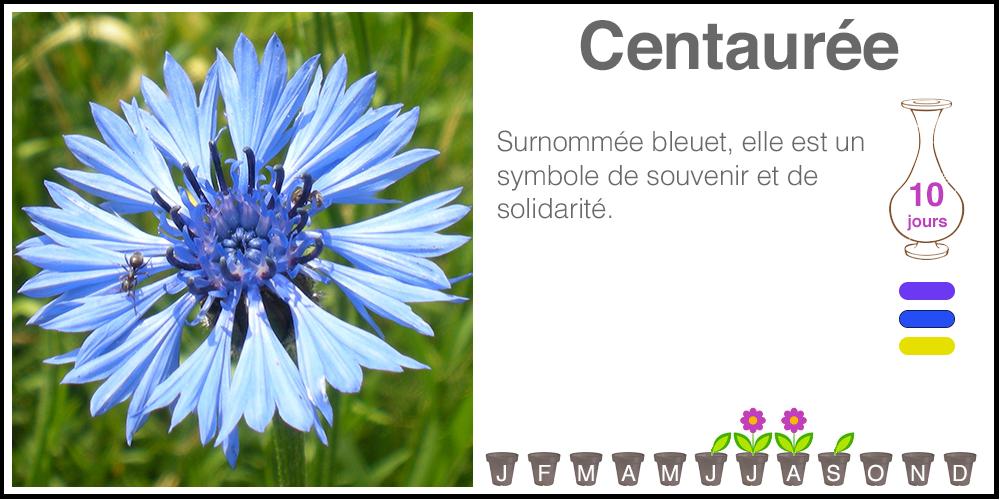 Centauree
