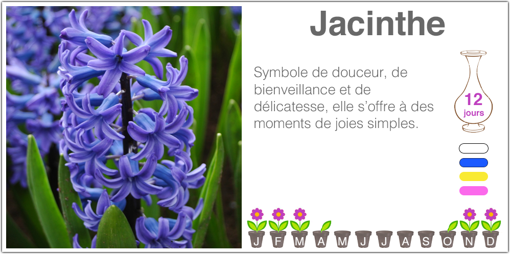 Jacinthe