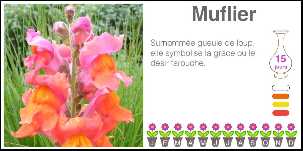 Muflier