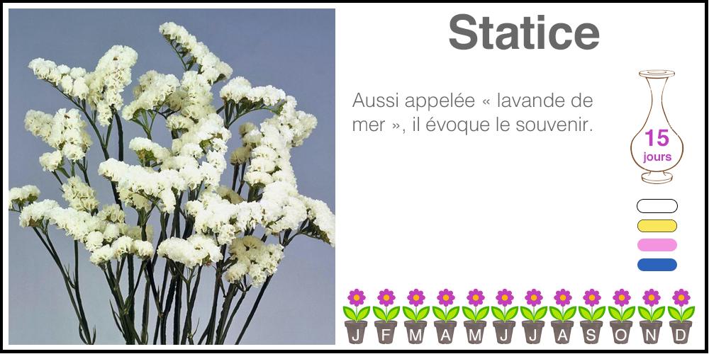Statice