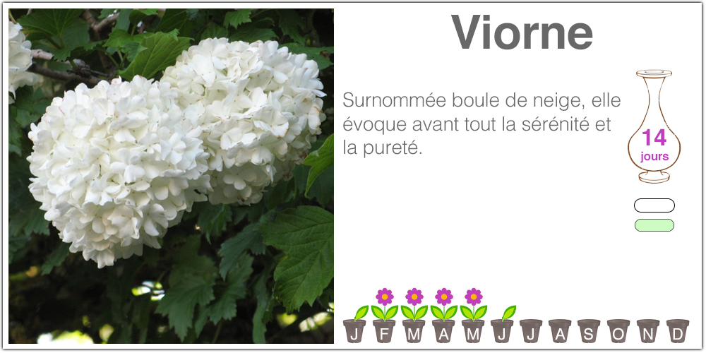 Viorne
